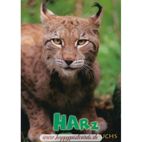 Harz - Luchs - Ansichtskarte