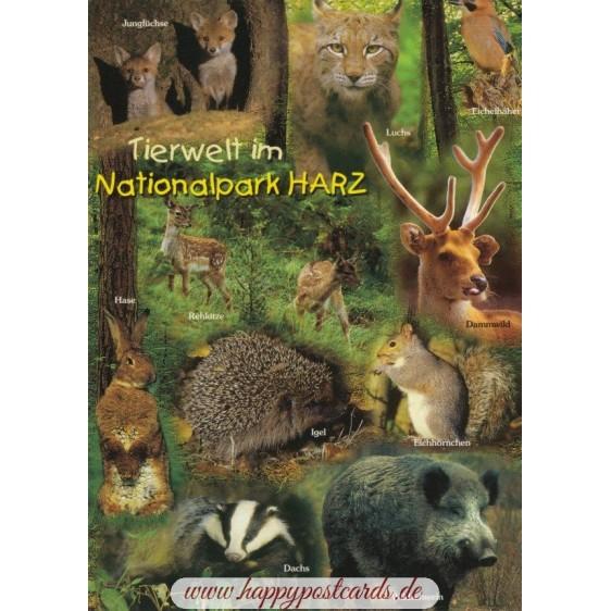 Harz - Tierwelt - Ansichtskarte