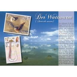 Der Wattwurm - Chronik - Ansichtskarte