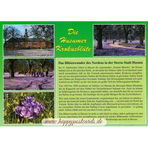 Die Husumer Krokusblüte - Chronicle - Viewcard