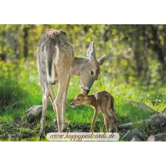 Fawn with its Mother