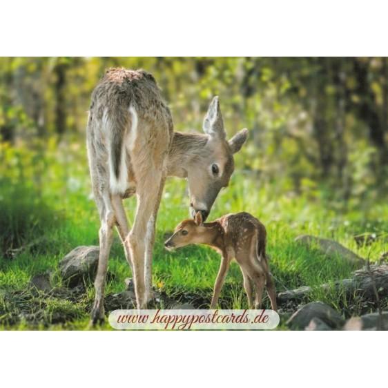 Rehkitz mit seiner Mutter