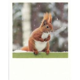 Winter Eichhörnchen - PolaCard