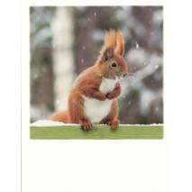 Winter squirrel - PolaCard