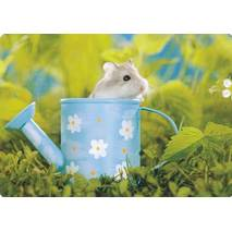 Hamster in watering can - Medley postcard