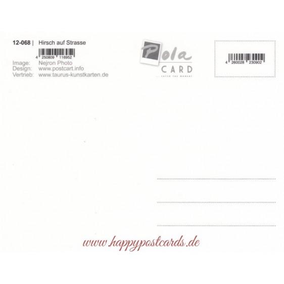 Hirsch auf Strasse - Weihnachtskarte - PolaCard