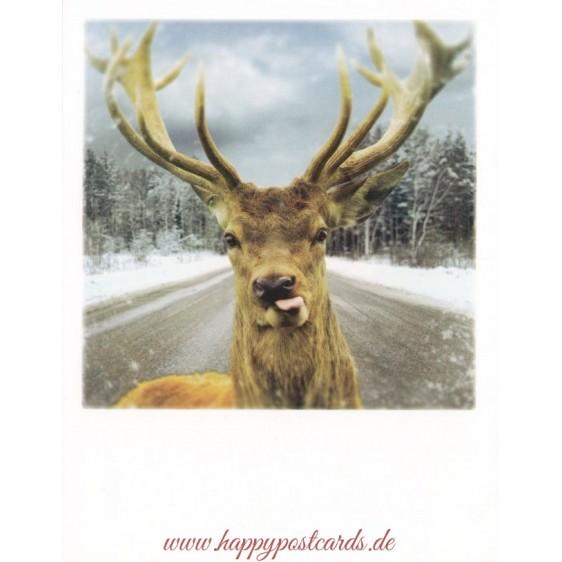 Deer on a street - PolaCard
