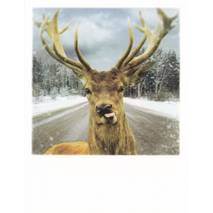 Deer on a street - PolaCard