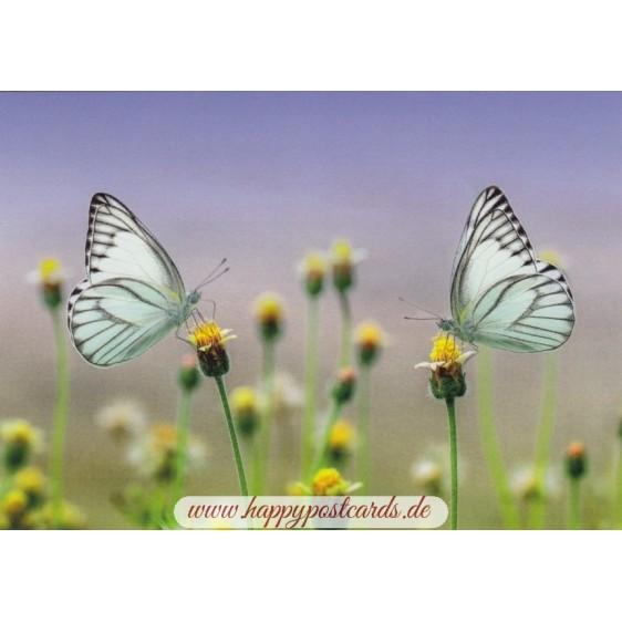 Butterflies - Postcard