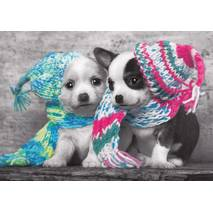 Dogs with scarves and caps