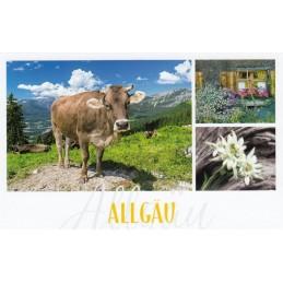 Allgäu - Kuh und Edelweiß - HotSpot-Card