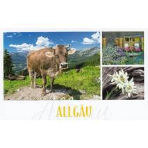 Allgau - cow and edelweis - HotSpot-Card