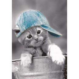 Cat with Cap