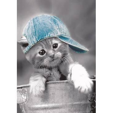 Katze mit Cappy