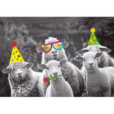 Party mit Schafen