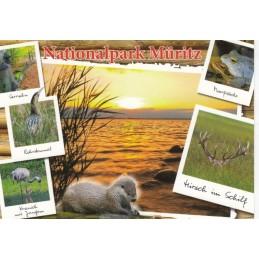 Nationalpark Müritz - Postkarte