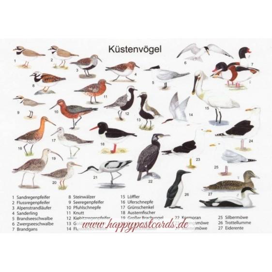 Küstenvögel - Ansichtskarte