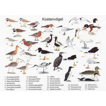 Birds from the coast - Viewcard