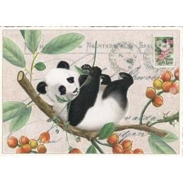 Panda - Tausendschön - Postkarte