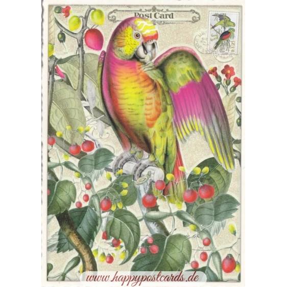 Papagei - Tausendschön - Postkarte