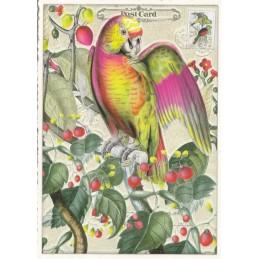 Parrot - Tausendschön - Postcard