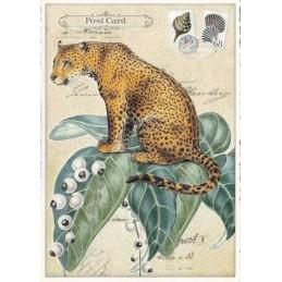 Leopard - Tausendschön - Postkarte