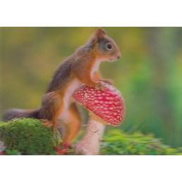 3D Eichhörnchen mit Fliegenpilz - Postkarte