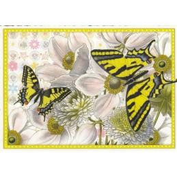 Butterflies - yellow