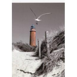 Fischland-Darß-Zingst - Leuchtturm Darßer Ort - Ansichtskarte
