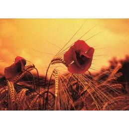 Mohnblume - Postkarte