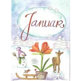 Januar - Amaryllis - Monthly Postcard