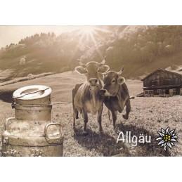 Kühe im Allgäu - Ansichtskarte