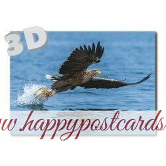 3D Tiger - Postcard