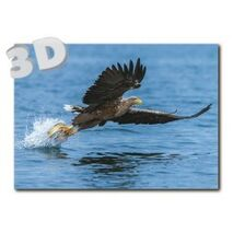 3D Sea eagle - Postcard