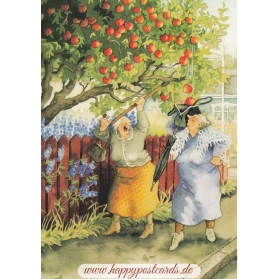 11 - Old Ladies shaking apples - postcard
