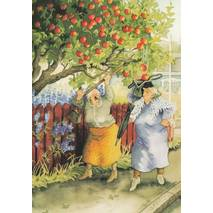 11 - Old Ladies shaking apples - postcard