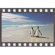 Penguins at the Beach - Postcard