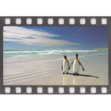 Pinguine am Strand - Postkarte
