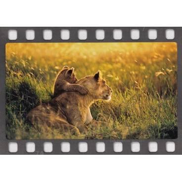 Löwenmama mit ihrem Jungen - Postkarte