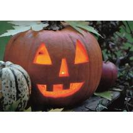 Kürbis - Halloween - Postkarte