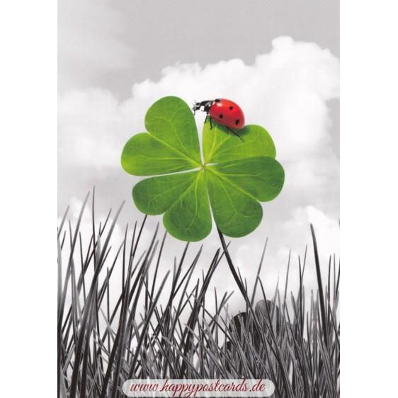 Marienkäfer auf Kleeblatt - Postkarte