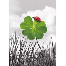 Ladybeetle on a Shamrock - Postcard