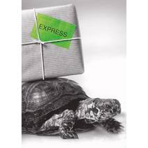 Turtle delivering Mail - Postcard