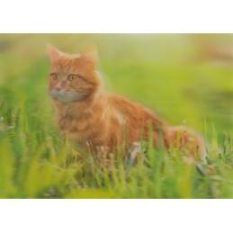 3D Rotbraune Katze im Gras - Postkarte