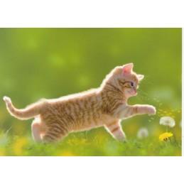 Das Kätzchen und die Pusteblume - Postkarte