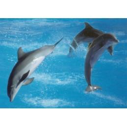 Dolphins - Postcard