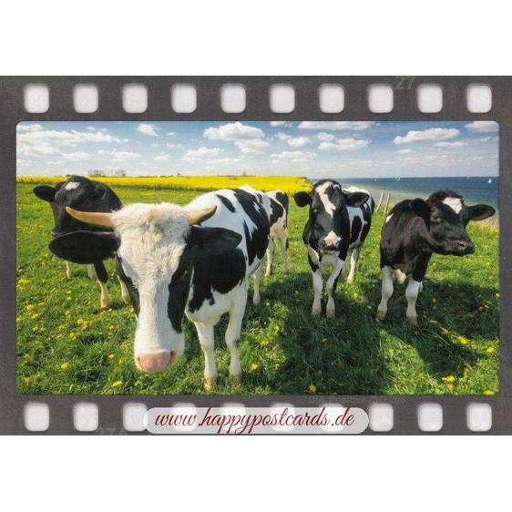 Kühe auf der Wiese - Postkarte