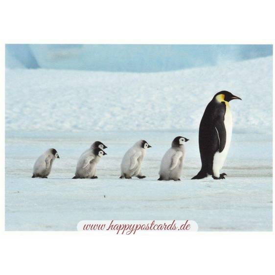 Family of Penguins - Postcard