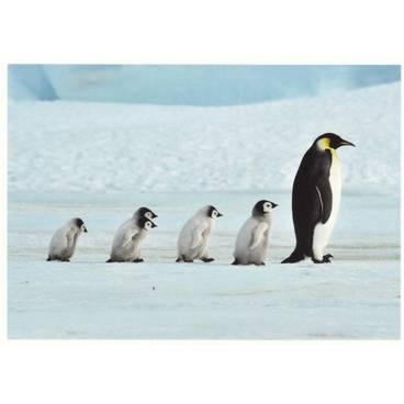 Pinguinfamilie - Postkarte