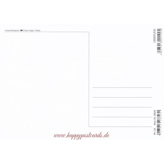 Muscheln - Postkarte